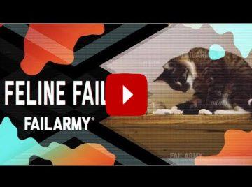 Katter som failar